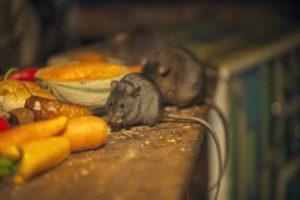 Средства защиты от грызунов в погребе